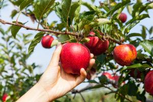 Read more about the article Træer til haven – og hvilke du skal vælge