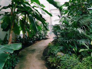 Read more about the article Indret din terrasse med smukke og dekorative planter