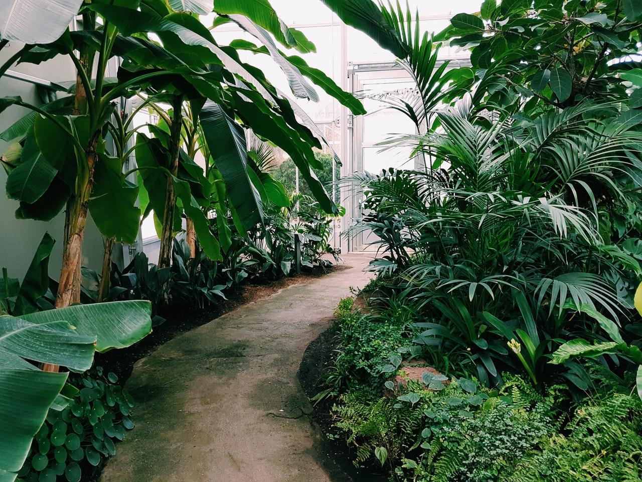 Indret din terrasse med smukke og dekorative planter