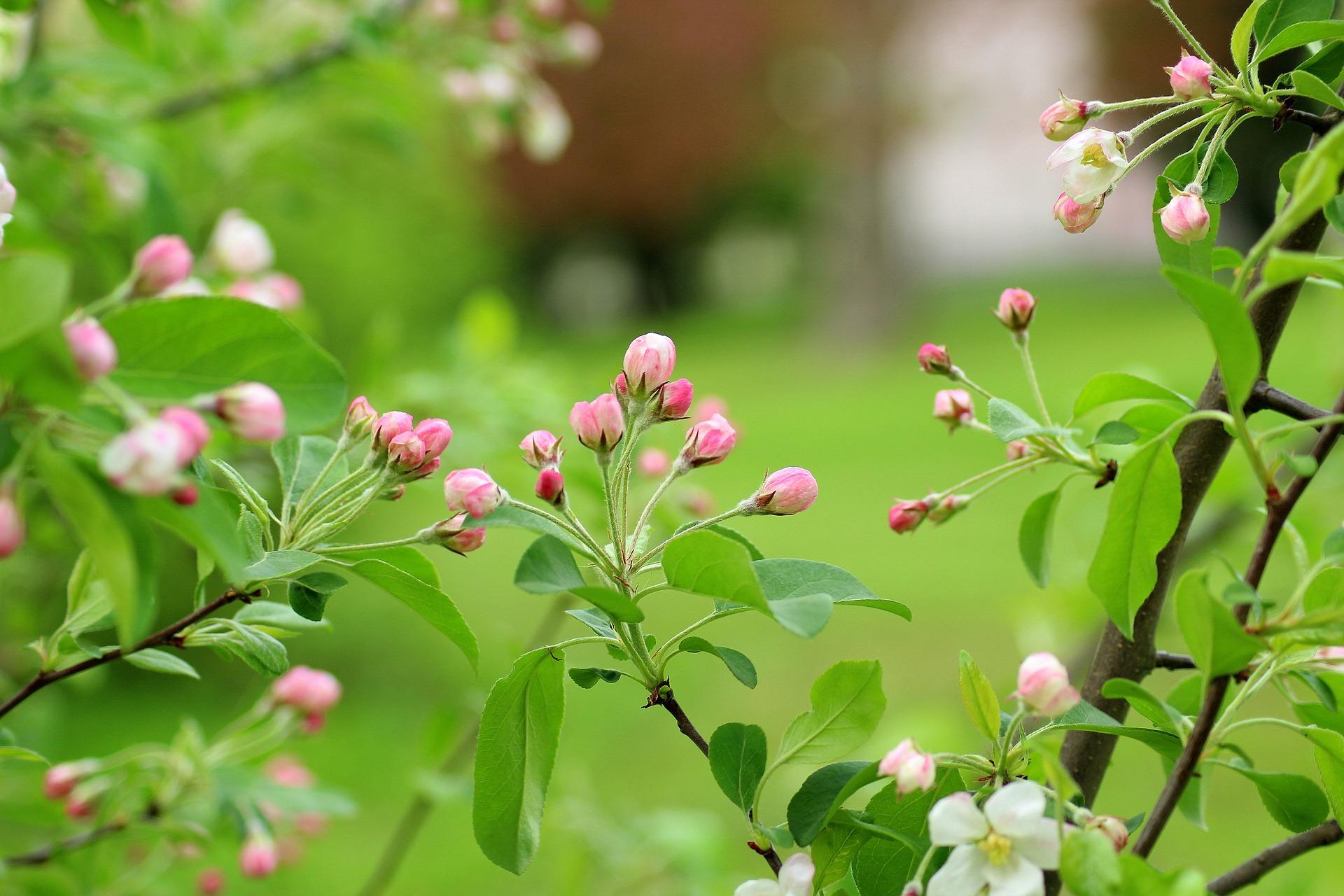 Blomstertræ