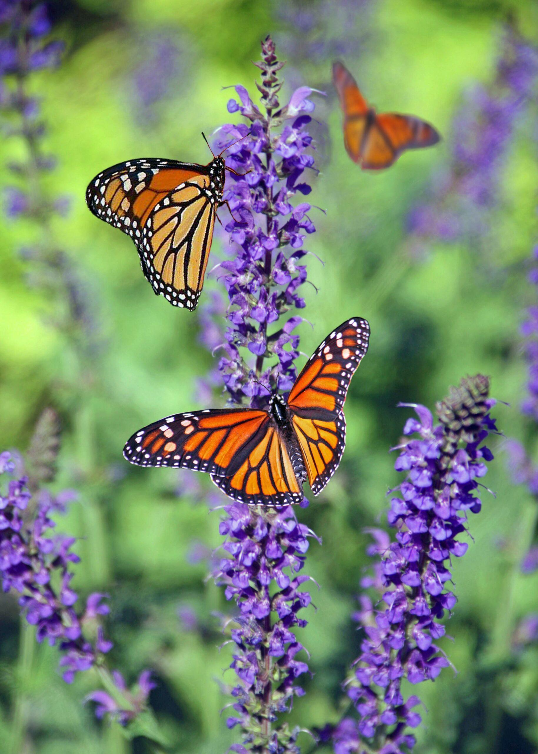 Read more about the article En vildere have hjælper biodiversiteten