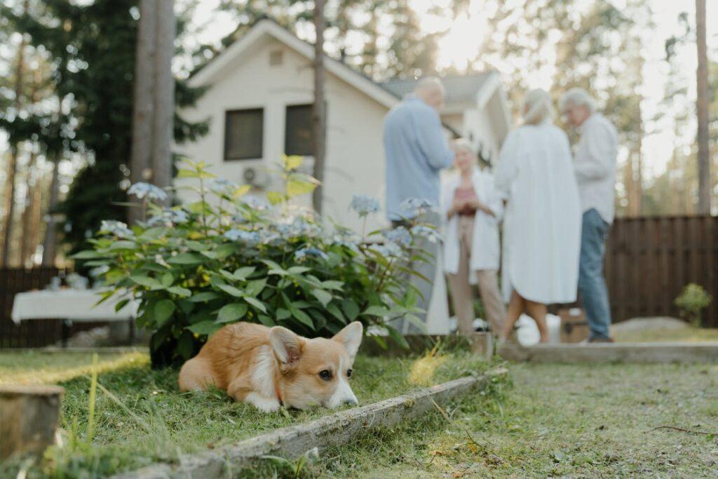 Hund i haven